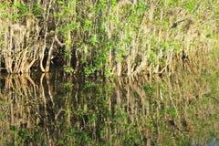 Espelho dos manguezais foto de stock