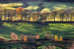 As árvores douradas do outono da luz do racking repicam o distrito Reino Unido Foto de Stock