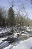 Córrego com cobertura do inverno Fotografia de Stock Royalty Free