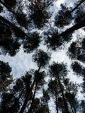 As árvores e as nuvens, olham de baixo de Ural, R?ssia fotografia de stock