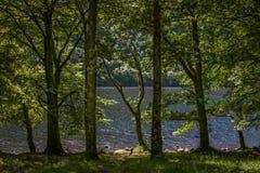 As árvores e o loch Fotos de Stock Royalty Free