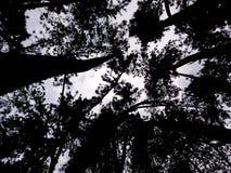 As árvores encantados que tocam no céu fotos de stock