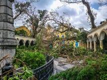 As árvores enormes desarraigadas Imagens de Stock Royalty Free