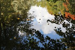 As árvores estão indicando na água imagens de stock royalty free