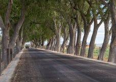 As árvores formam um dossel sobre uma estrada imagem de stock