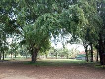 As árvores grandes na floresta foto de stock royalty free