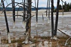 As árvores inoperantes alinham o passeio à beira mar nos potenciômetros de pintura da fonte arrastam no parque de Yellowstone imagens de stock
