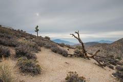 As árvores inoperantes aproximam a opinião das chaves em Joshua Tree National Park Fotos de Stock