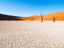 As árvores inoperantes do espinho do camelo em Deadvlei secam a bandeja com solo rachado no meio das dunas vermelhas do deserto d Imagens de Stock