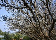As árvores inoperantes e secam Imagem de Stock Royalty Free