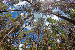 As árvores levantam o céu Fotos de Stock