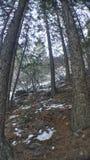 As árvores levantam o monte foto de stock royalty free