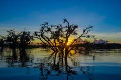 As árvores mostradas em silhueta contra um céu alaranjado no por do sol sobre Laguna grandioso nos animais selvagens de Cuyabeno  Fotos de Stock