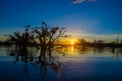 As árvores mostradas em silhueta contra um céu alaranjado no por do sol sobre Laguna grandioso nos animais selvagens de Cuyabeno  Fotos de Stock Royalty Free