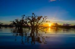 As árvores mostradas em silhueta contra um céu alaranjado no por do sol sobre Laguna grandioso nos animais selvagens de Cuyabeno  Foto de Stock