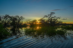 As árvores mostradas em silhueta contra um céu alaranjado no por do sol sobre Laguna grandioso nos animais selvagens de Cuyabeno  Fotografia de Stock Royalty Free