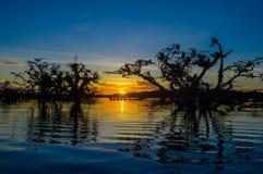 As árvores mostradas em silhueta contra um céu alaranjado no por do sol sobre Laguna grandioso nos animais selvagens de Cuyabeno  Imagens de Stock