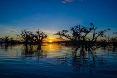 As árvores mostradas em silhueta contra um céu alaranjado no por do sol sobre Laguna grandioso nos animais selvagens de Cuyabeno  Imagens de Stock Royalty Free