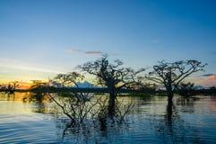 As árvores mostradas em silhueta contra um céu alaranjado no por do sol sobre Laguna grandioso nos animais selvagens de Cuyabeno  Fotografia de Stock