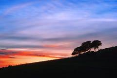 As árvores mostram em silhueta contra o céu do por do sol Imagem de Stock Royalty Free