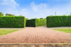 As árvores muram no parque de Suanluang RAMA IX Fotos de Stock