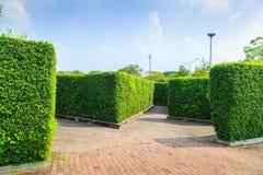 As árvores muram no parque de Suanluang RAMA IX Foto de Stock Royalty Free