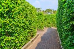 As árvores muram no parque de Suanluang RAMA IX Fotografia de Stock