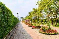 As árvores muram no parque de Suanluang RAMA IX Fotografia de Stock Royalty Free