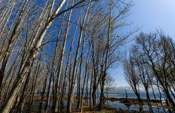 As árvores na água Imagem de Stock Royalty Free