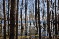 As árvores na água Imagens de Stock Royalty Free