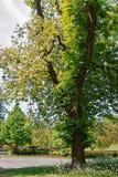 As árvores na flor estacionam em Leeds Castle Kent do Reino Unido imagens de stock