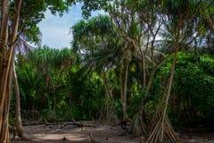 As árvores na ilha Maldivas fotos de stock