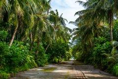As árvores na ilha Maldivas fotografia de stock