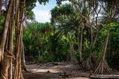 As árvores na ilha Maldivas imagens de stock