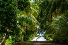 As árvores na ilha Maldivas fotos de stock royalty free