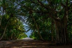 As árvores na ilha Maldivas imagens de stock royalty free