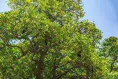 As árvores na ilha Maldivas foto de stock royalty free