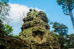 As árvores nas paredes do templo Ta Prohm angkor Fotografia de Stock