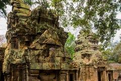 As árvores nas paredes do templo Ta Prohm angkor Fotos de Stock Royalty Free
