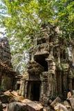 As árvores nas paredes do templo Ta Prohm angkor Imagem de Stock Royalty Free