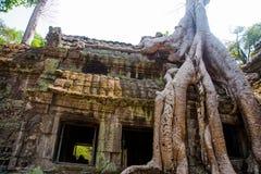 As árvores nas paredes do templo Ta Prohm angkor Imagens de Stock