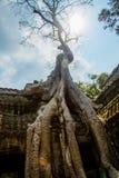 As árvores nas paredes do templo Ta Prohm angkor Imagem de Stock