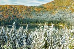 As árvores nevado e o outono colorido ajardinam, lago st Anna, Romênia Fotos de Stock