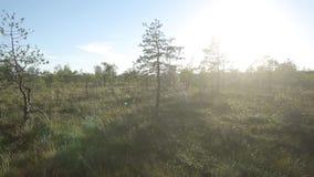 As árvores no pântano migram no stedicam em um dia ensolarado vídeos de arquivo