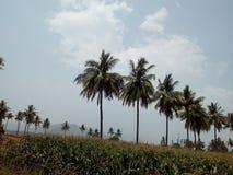 As árvores nos campos no banco do rio Imagens de Stock