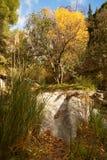As árvores, os juncos e a grama cercam as rochas lisas do secadas acima do rio Fotos de Stock