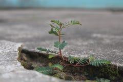 As árvores pequenas bonitos crescem-se weeds foto de stock