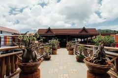 As árvores pequenas dos bonsais decoram o terraço no café Ásia imagem de stock royalty free