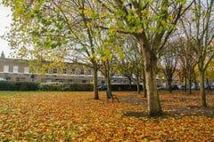 As árvores que mudam a cor com queda saem no jardim de Londres perto do mercado da flor da estrada de Colômbia Imagens de Stock