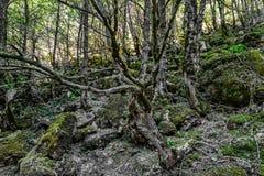 As árvores secas imagens de stock